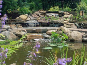 Water feature designed and installed by NC94-pond planting