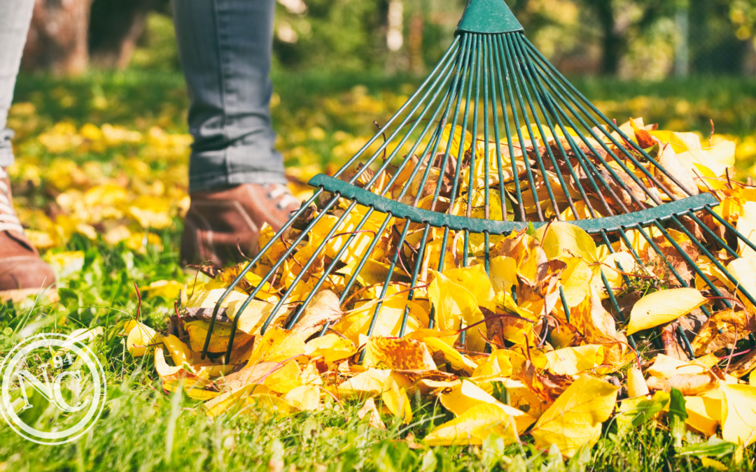 Top 5 Fall Clean Up Tips